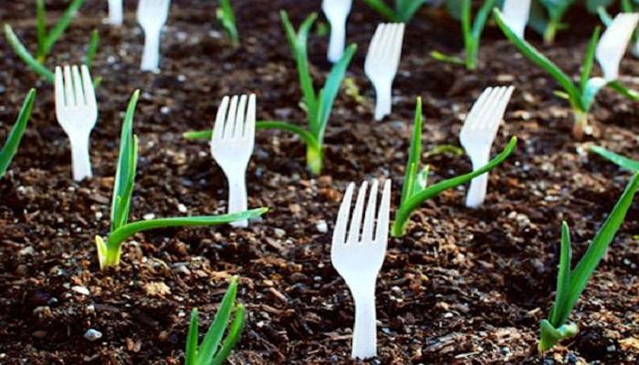 Male cake za uzgoj biljaka ;) Viljus10