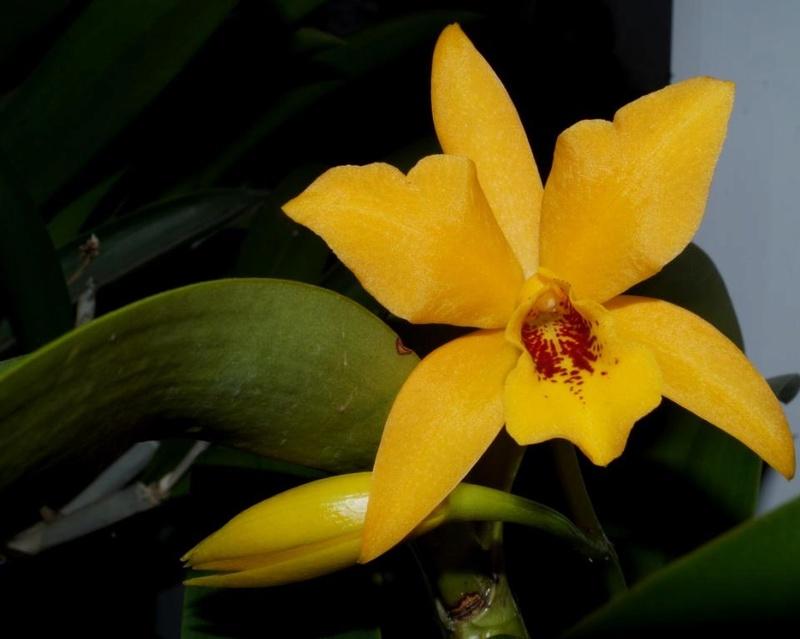 Orchideen 2 (fortlaufende Seiten 200 bis 300) - Seite 52 Dsc00911