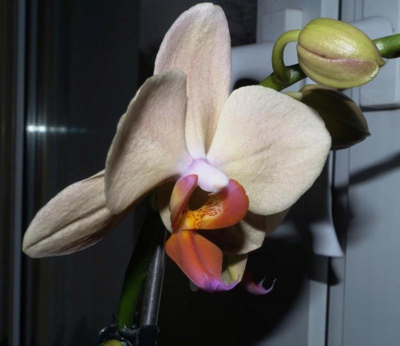Orchideen 2 (fortlaufende Seiten 200 bis 300) - Seite 52 Dsc00912