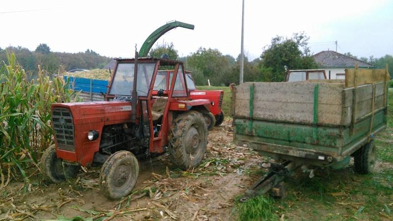 Siliranje kukuruza 14900510