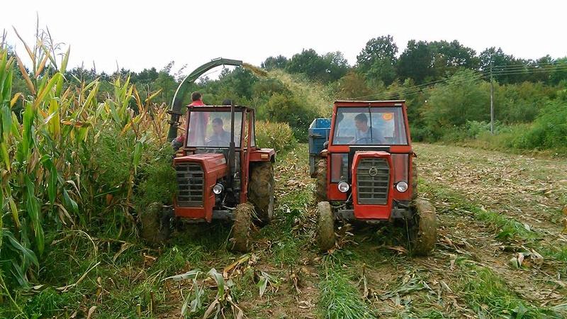 Siliranje kukuruza 14925710