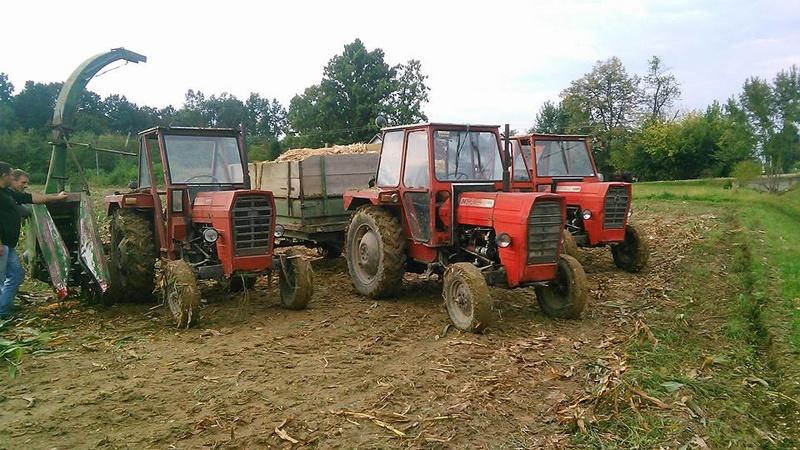 Siliranje kukuruza 14947910