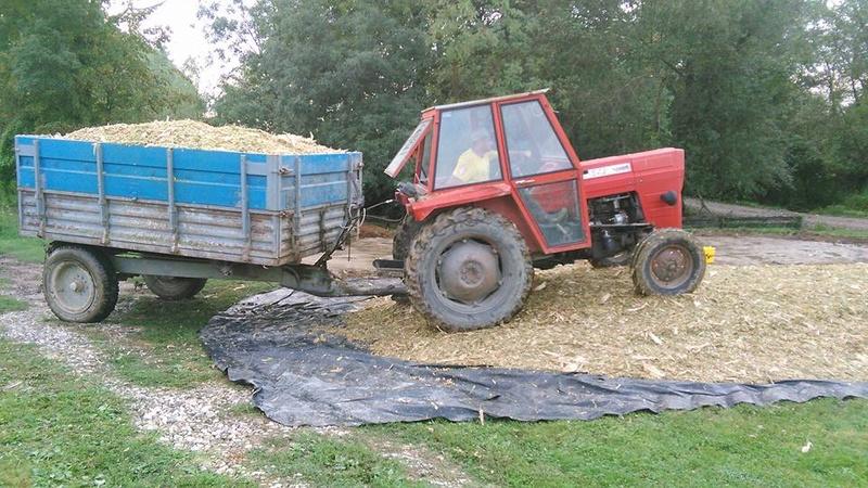 Siliranje kukuruza 14963210