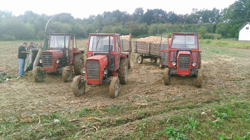 Siliranje kukuruza 14993510