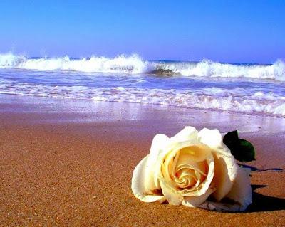 condoléances  Rose_p10
