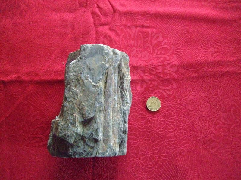 bois fossilisé... Dscf5213