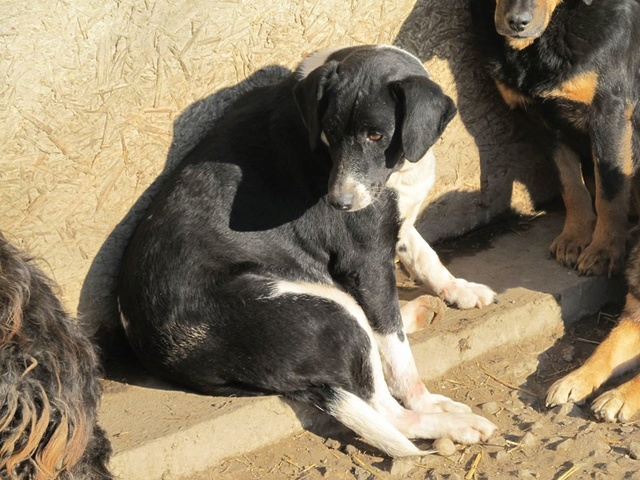 BELLA, F-X, née 2010, 17 kg, Joueuse, câline, brave (BELLA) Adoptée (FALD) via Association AVRAH - Page 2 12_12335