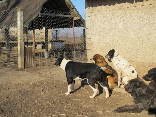 BELLA, F-X, née 2010, 17 kg, Joueuse, câline, brave (BELLA) Adoptée (FALD) via Association AVRAH - Page 2 12_12336