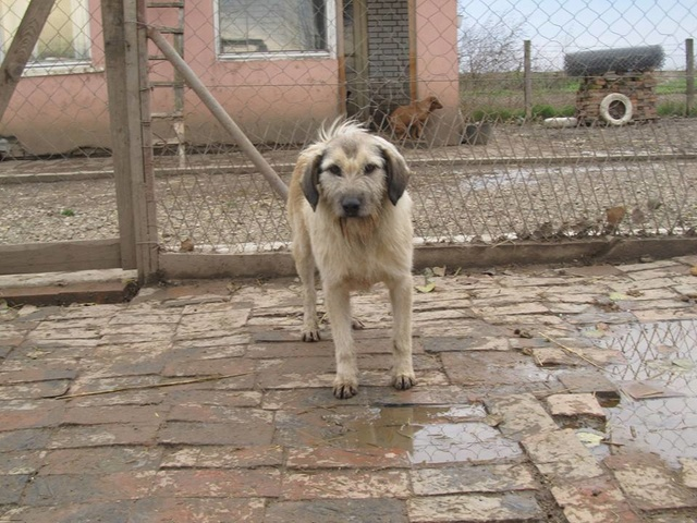 JULIA, F-X, née 2013 - 17 kg - Adorable (BELLA) Prise en charge SPA PONTARLIER 13_11273