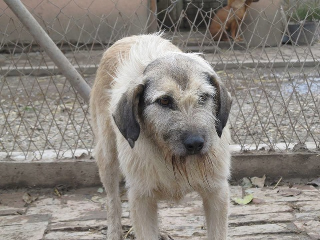 JULIA, F-X, née 2013 - 17 kg - Adorable (BELLA) Prise en charge SPA PONTARLIER 13_11274