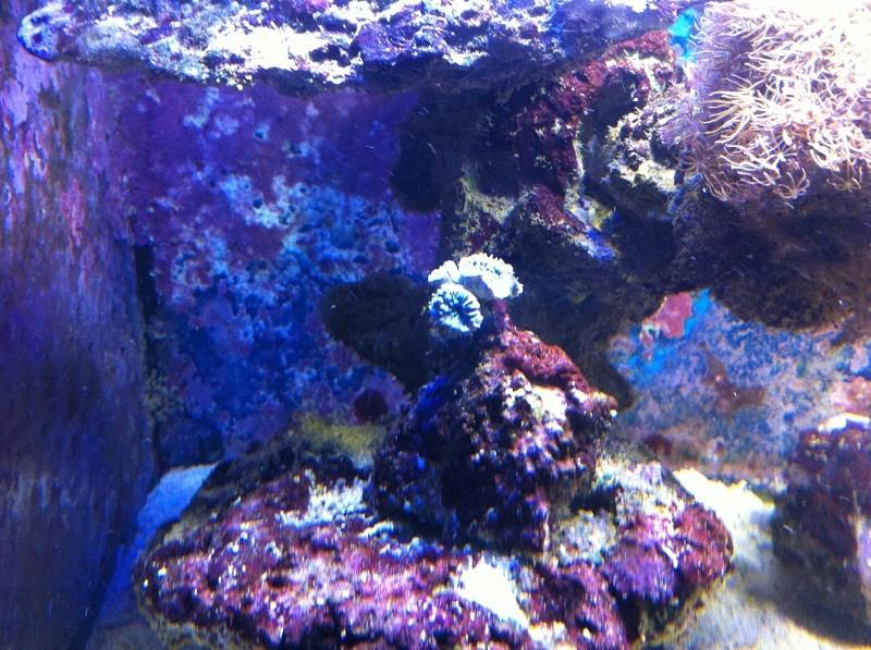 coraux pas en forme ! Img_0818