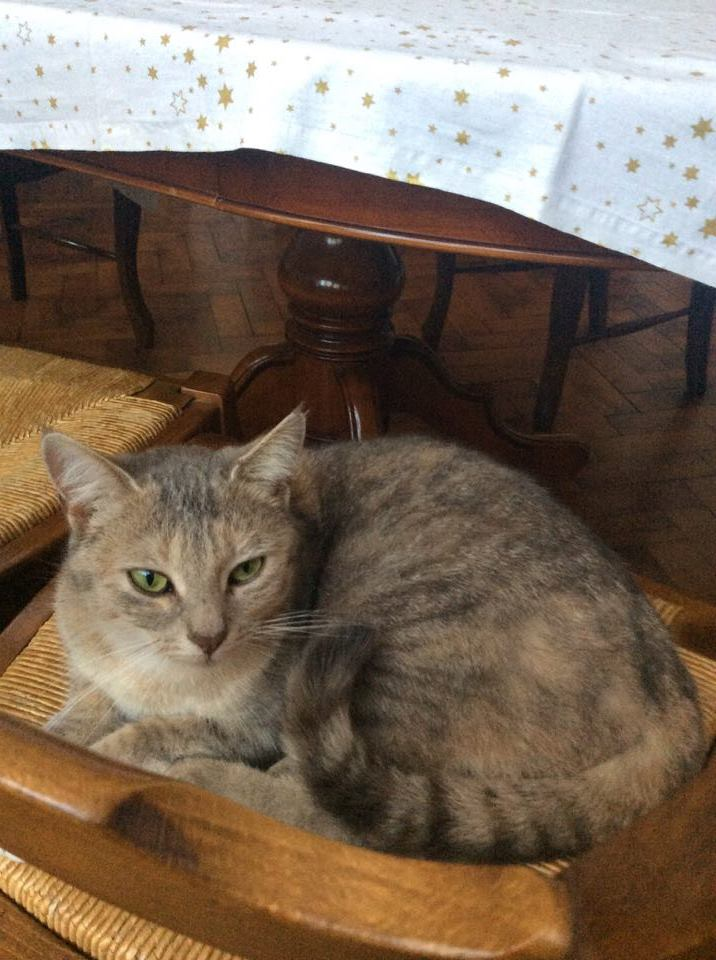 pipelette, jeune chatte gestante - Page 2 15870510