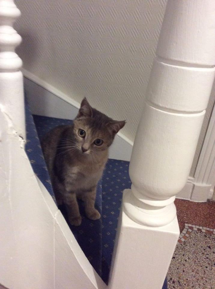 pipelette, jeune chatte gestante - Page 2 15909810
