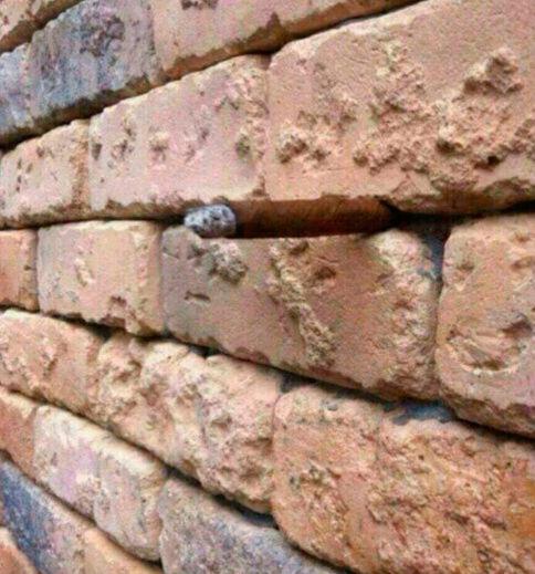 Выглядит как снимок обычной стены. Qip_sh19