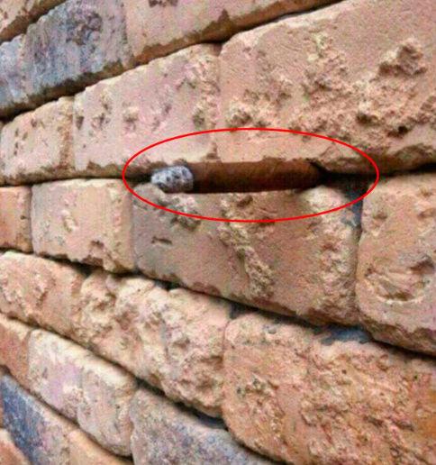 Выглядит как снимок обычной стены. Qip_sh20