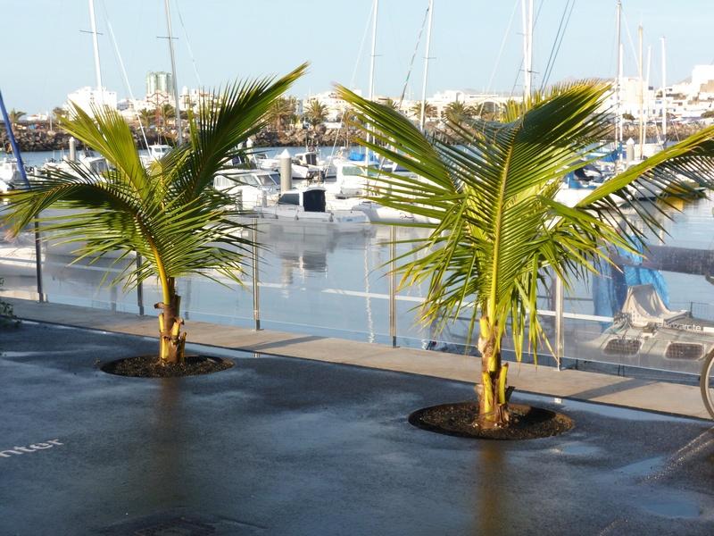 Lanzarote, l'île esthétique P1030713