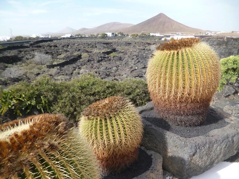 Lanzarote, l'île esthétique P1030921