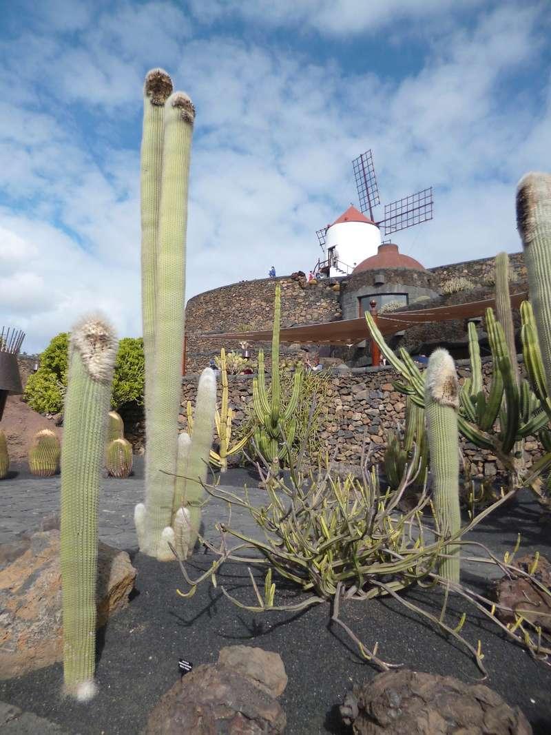 Lanzarote - Lanzarote, l'île esthétique - Page 2 P1040012