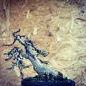 Ficus Retusa from a nursery broom Img_0810