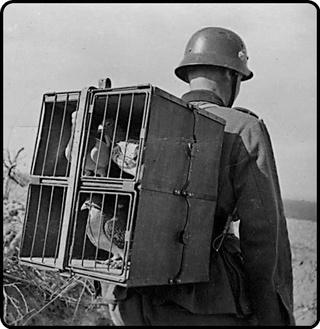 On est pas des pigeons 6b275610