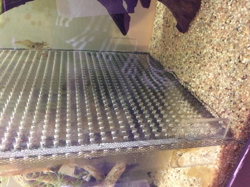 Bac de reproduction eau douce Img_0015