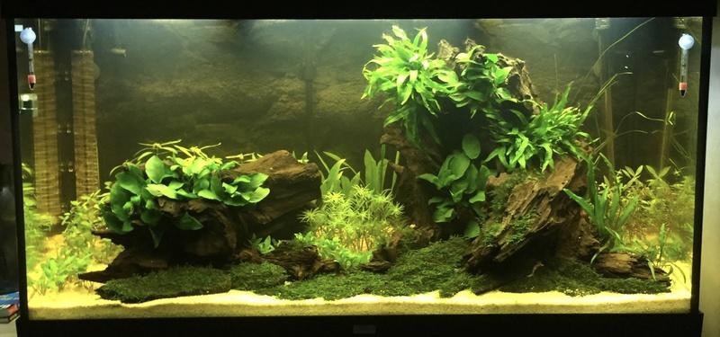 Aquarium juwel rio 300 - Page 3 Fullsi10