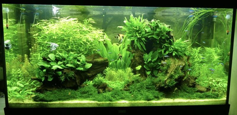 Aquarium juwel rio 300 - Page 3 Fullsi11