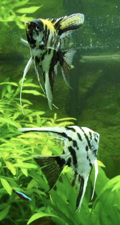 Aquarium juwel rio 300 - Page 3 Fullsi22