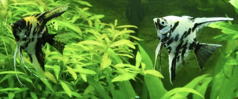Aquarium juwel rio 300 - Page 3 Fullsi27