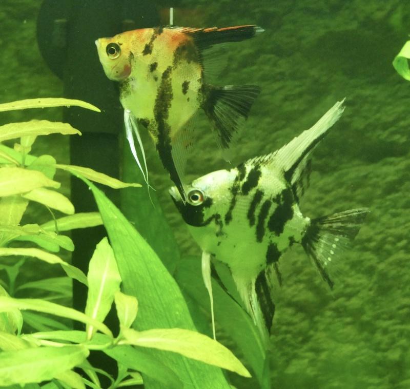 Aquarium juwel rio 300 - Page 3 Fullsi30