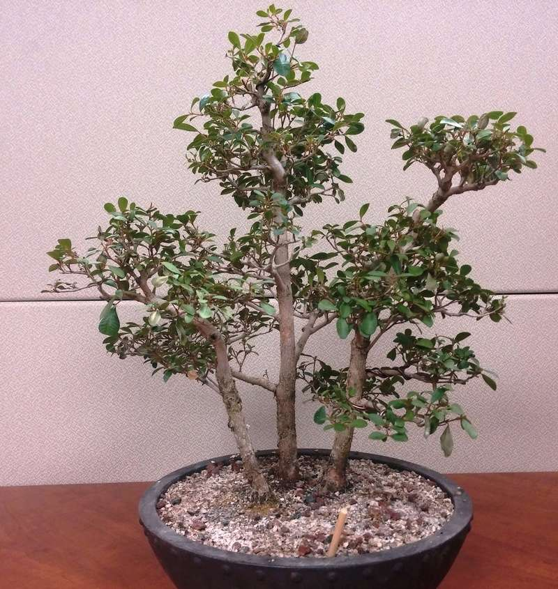 tropical tree identification help - please. 20161210