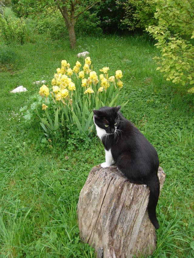 Associer nos iris à d'autres plantes pour de beaux massifs Dsc05010