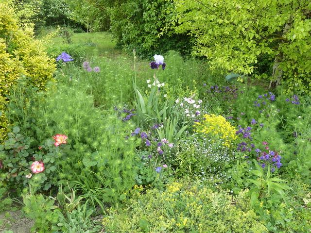 Associer nos iris à d'autres plantes pour de beaux massifs P1090911