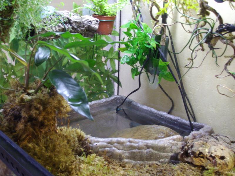 Dino mon petit Rhino Imgp0411