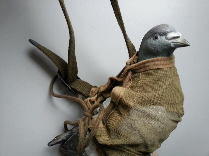 Les pigeons dans les transmissions 20130213
