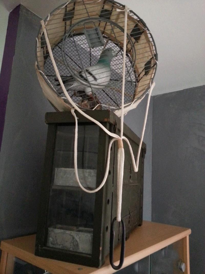 Les pigeons dans les transmissions 20130215