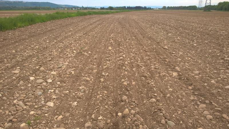 outils preparation du sol maïs - Page 2 Wp_20135