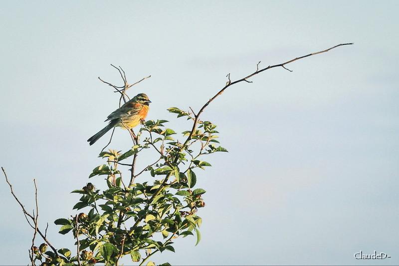 Animaux, oiseaux... etc. tout simplement ! - Page 3 Oiseau10