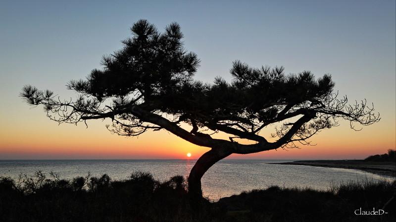 禅 au pays du soleil couchant Pinzen10