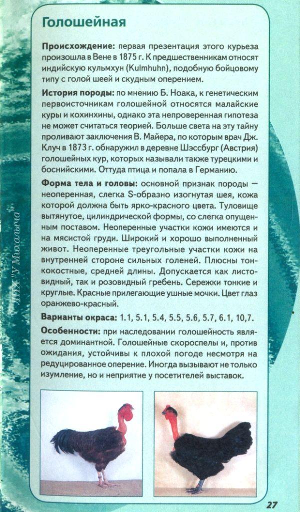 Голошейные куры - Страница 16 Oaaue10