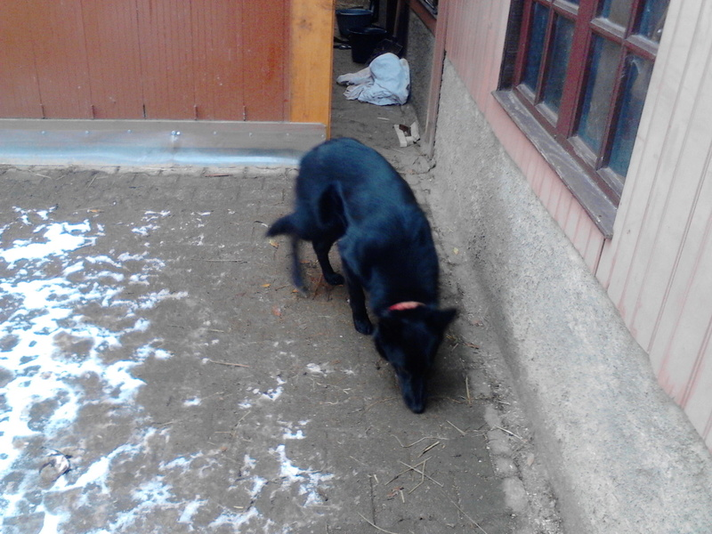 Jolie petite chienne cherche gentils maitres ! Img_2010