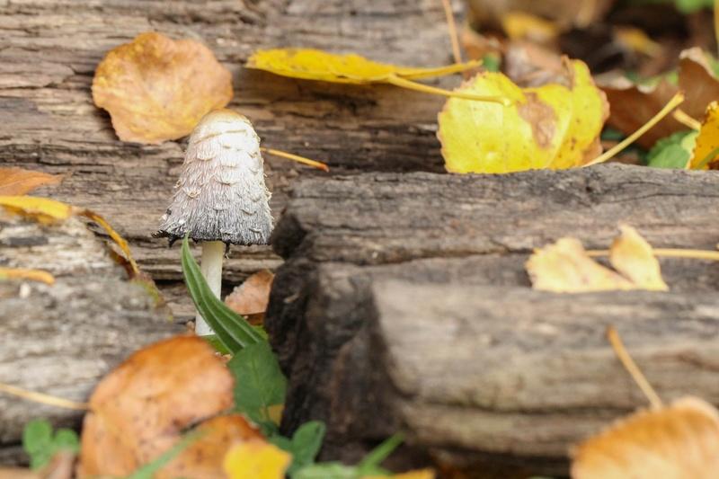 [fil ouvert] les champignons - Page 2 Img_0010