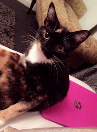 LOST TORTOISE CAT Indy410