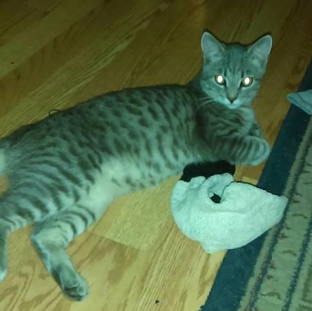 LOST GREY CAT Indy510