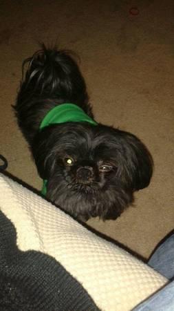 LOST DOG NAMED ASHTON Indy810