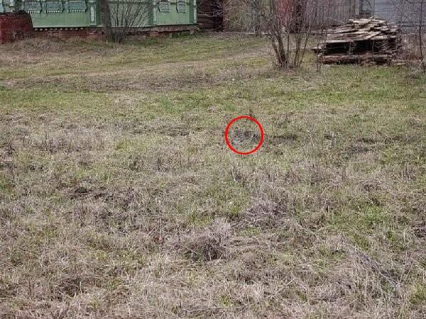 Seulement 12% des gens voient un renard sur cette photo Sans_t15