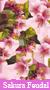 Sakura Feudal [Confirmación] 50x9010