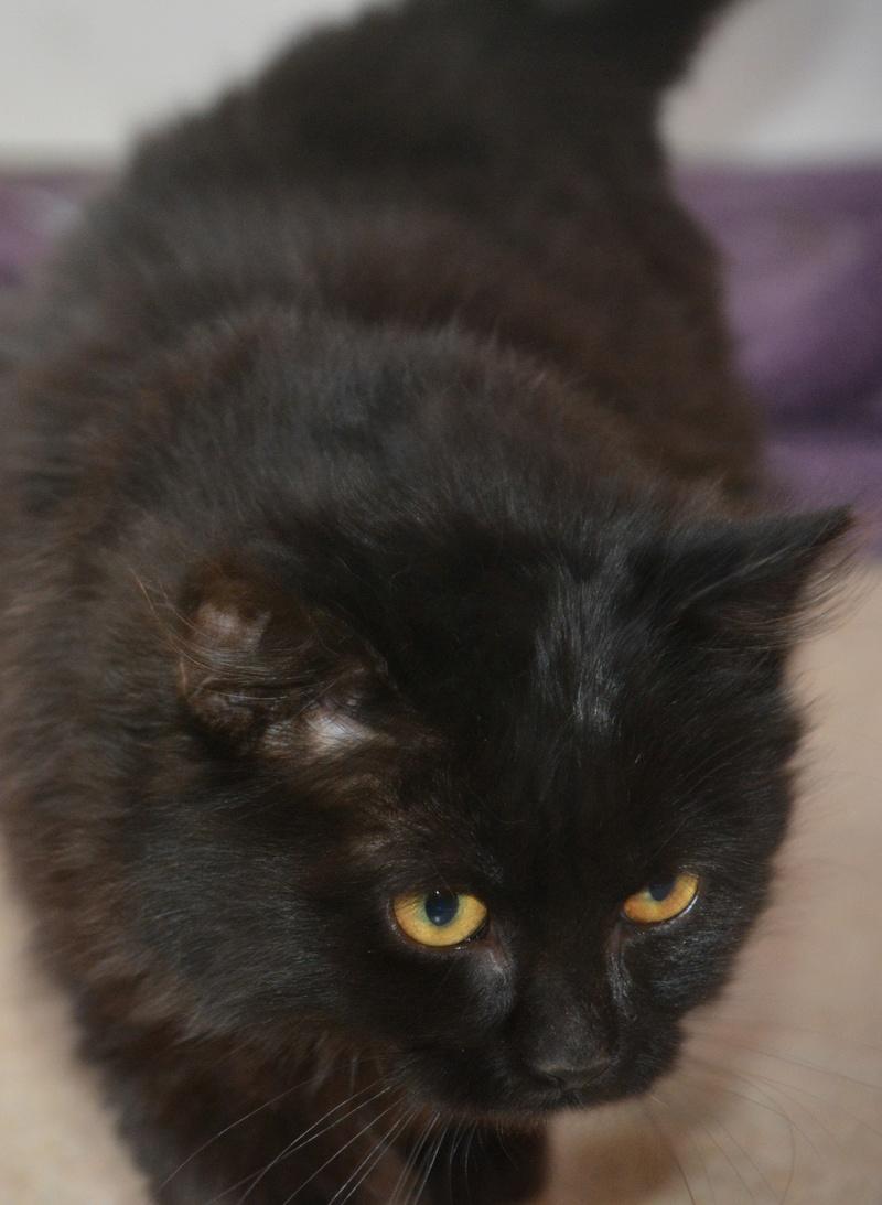 CHAMALLOW , chaton très tendre!  Dsc_5316