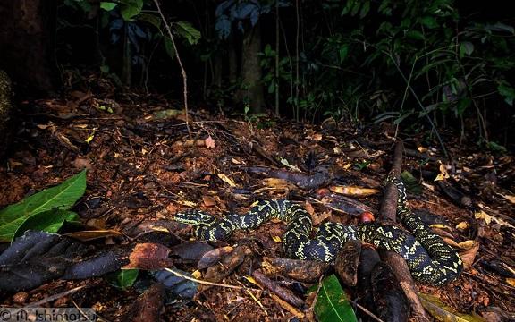 Choix du premier spécimen Jungle10