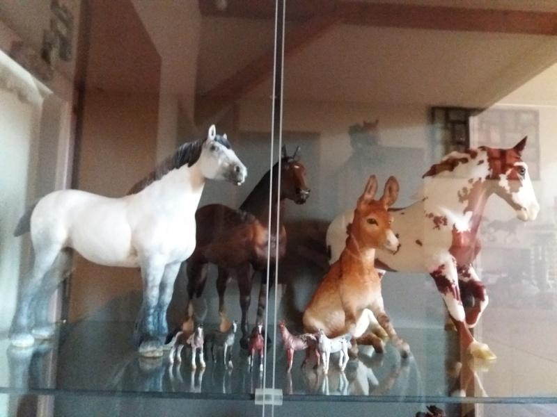 les chevaux de l'écurie Du vieux porche, bienvenue dans ce refuge miniature - Page 7 20170126
